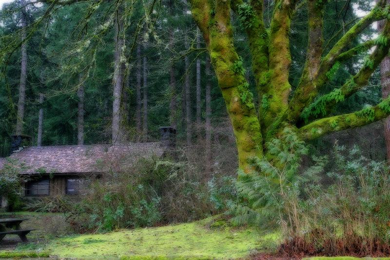 Taken at Twanoh State Park on Hood Canal in Washington State.