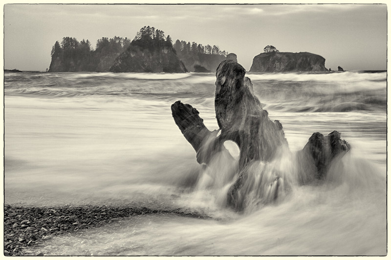 Driftwood on Rialto Beach