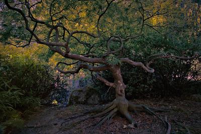 Japanese Garden, Lithia Park, Oregon