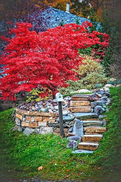 Pathway in Fall