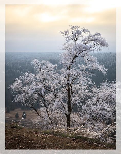 Frosty Tree at Dusk