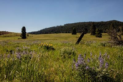 Wildflowers Elk Heights