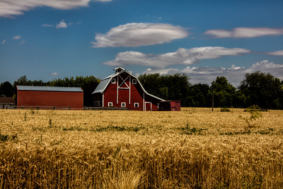 Red barns Russell Creek Rd Walla Walla wheat field foreground 7-22-16