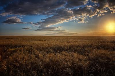Sun going down golden hour wheat field near Walla Walla 7-22-16