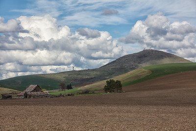 Old barn in wheat field Steptoe Butte background 4-23-17
