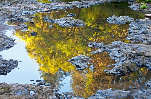 Creek Tree Reflection
