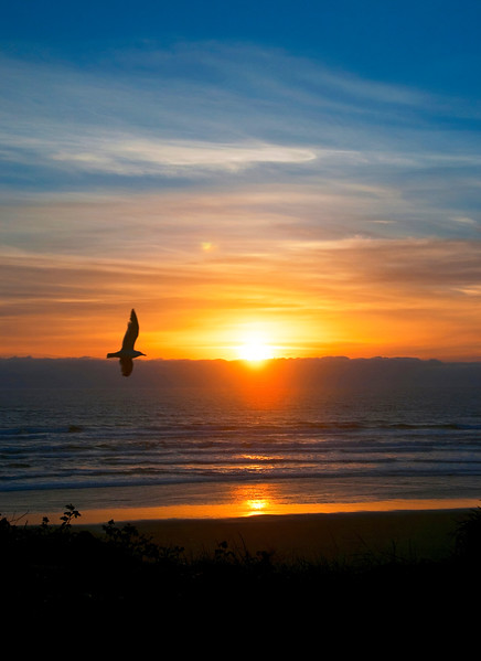 Seagull Ocean Sunset - Newport, Oregon