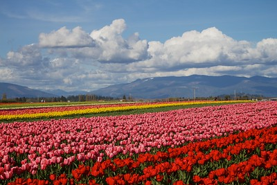 Skagit County - Washington State