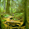 Wilbert Trail, South Whidbey State Park