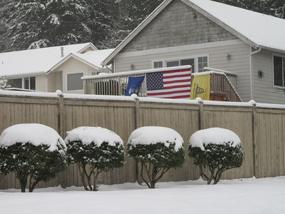 Showing the Colors. Day 2. First snow of 2012. Freeland, Whidbey Island. January 18, 2012
