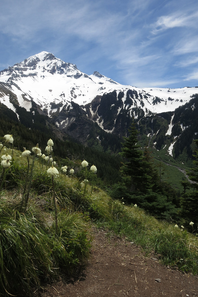 Mount Hood, Bear Grass and Trail - June 2013