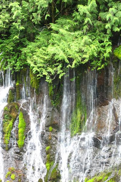 Panther Creek Falls - Near Carson, WA - 2013