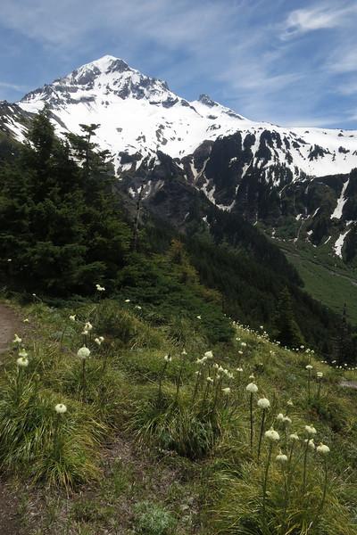 Mount Hood, Bear Grass and Valley Below