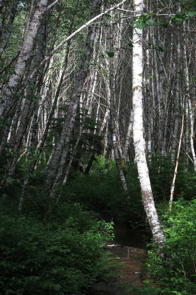 Trees and Lost Creek - Oregon 2013