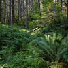 Lewis R Forest, Washington