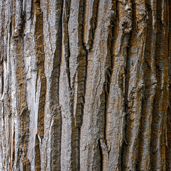 Bark | Leavenworth, WA | June 2018