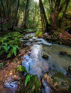 Peter's Creek, California