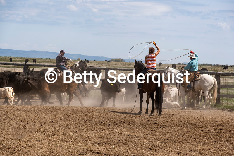 Calf Roping, Burns, Oregon