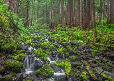 Tributary Stream, Sol Duc Rainforest