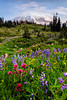 Wildflowers, Mt. Rainier, Washington