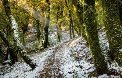 Achisticha Trail, Long Ridge OSP