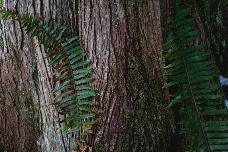 fern-and-tree