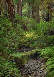 Brown Creek Trail, Prairie Crk Redwoods