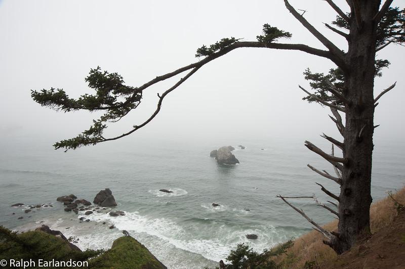 Fog rolls in on the Oregon coast.