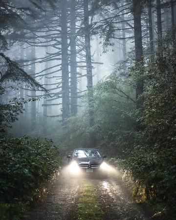 Forest Benz