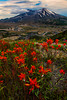 Indian Paintbrush, Mt. St. Helens, Washington