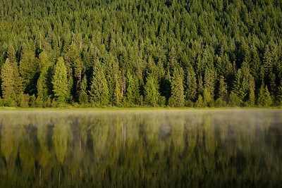 Evergreen Reflection - Trillium Lake