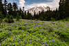Wildflowers, Mt. Rainier National Park, Washington