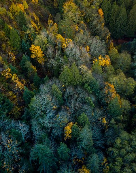 fall-trees-drone