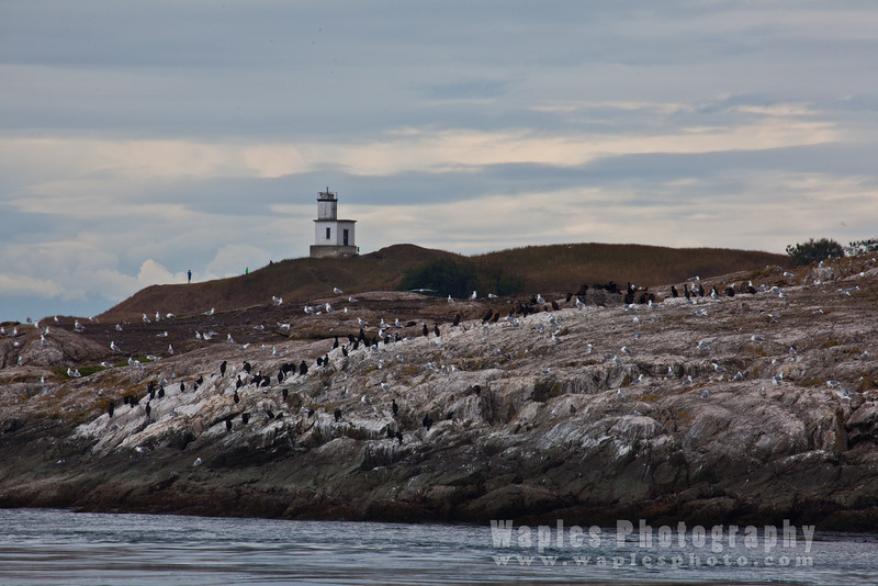 Lighthouse at Cattle Point