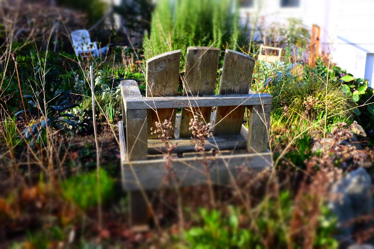Seat in the garden | Seattle, WA | February 2018