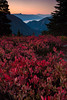 Heather Meadows, North Cascades National Park