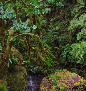 Fall Creek Trail, Oregon