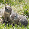 Rodent Pair, Malheur National Wildlife Refuge, Oregon