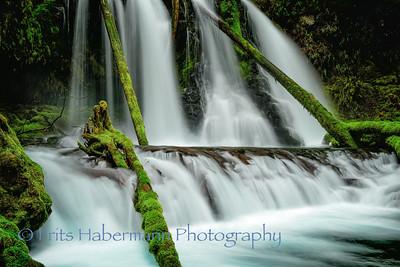 Water Arboretum