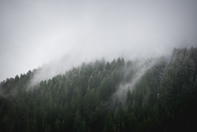 northwest-trees-in-snow