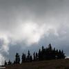 Spruce trees under low clouds on Hurricane Ridge, Olympic National Park, Washington.
