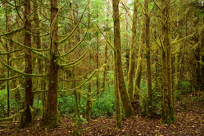 Deep in the Rainforest of Vancouver Island