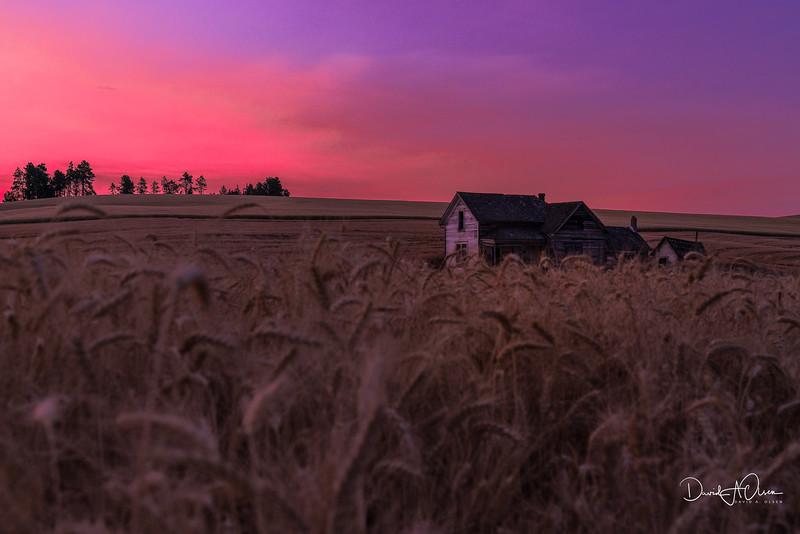 Homestead Among the Wheat