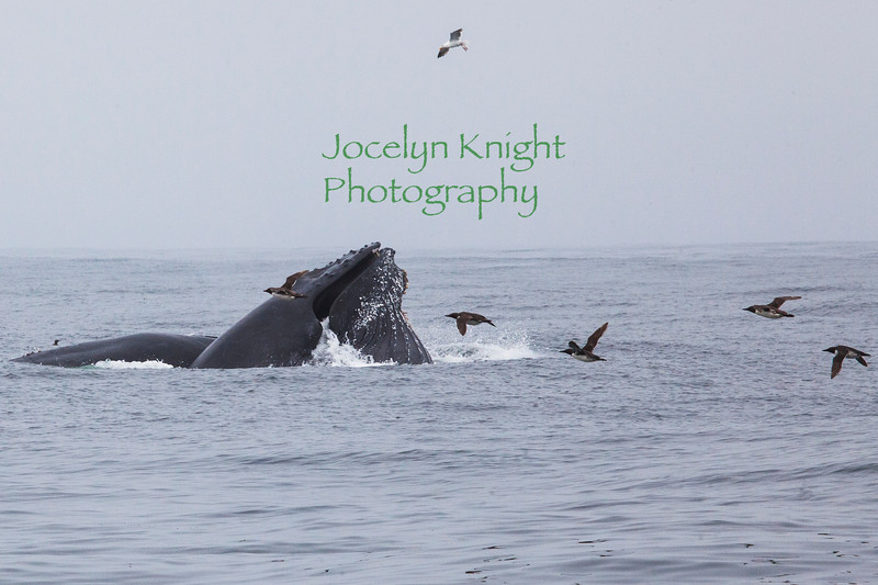 Whales7921