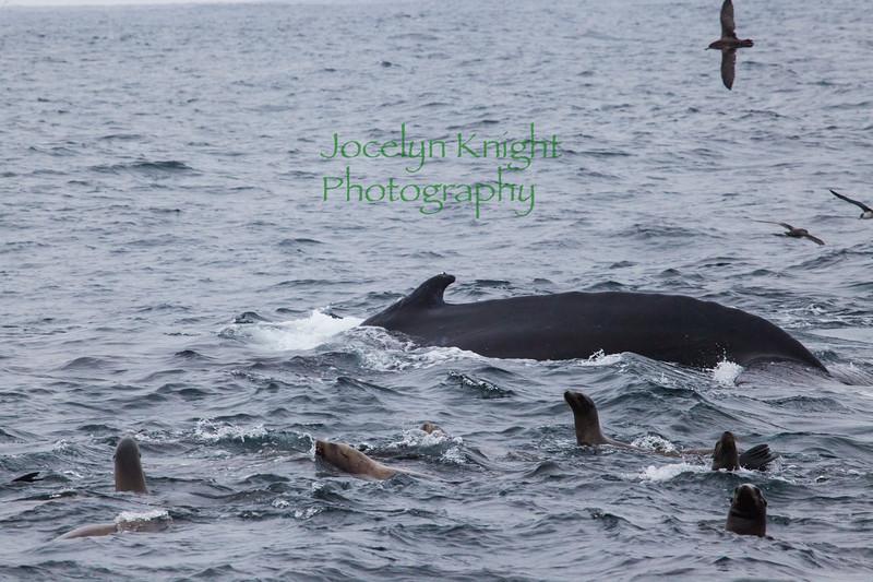 Whale7832