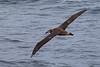 Albatross7851