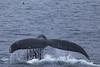 WhaleFluke7669