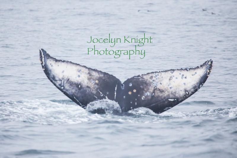WhaleFluke7671