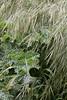 Non-native weeds