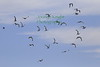 Gulls above I Ranch on Dec 10, 2020